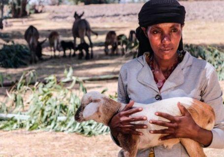 Inovação no combate à emergência climática na Etiópia: o seguro pecuário