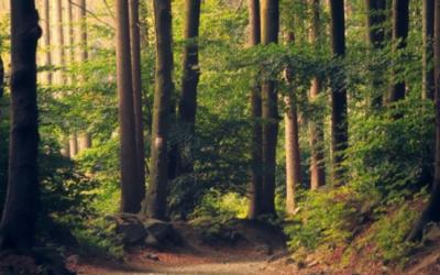 Florestas: para que servem e como protegê-las